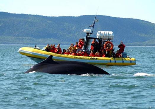 observation-baleines